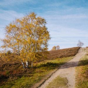 Büsenbachtal in der Lüneburger Heide   © Andreas Bender
